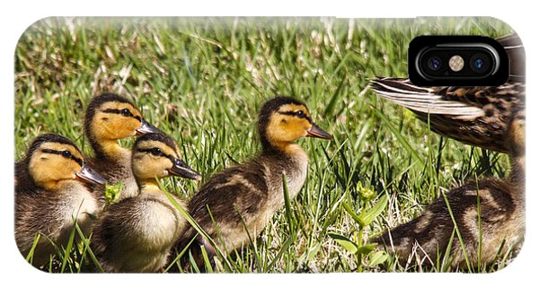 Mallard Ducklings IPhone Case