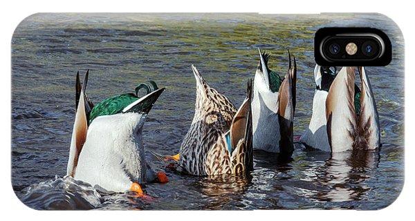 Mallard iPhone Case - Mallard Ducks Upending And Feeding by Simon Booth