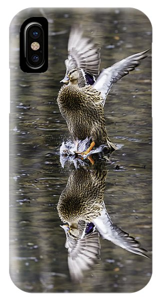 Mallard Hen Landing IPhone Case