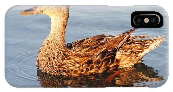 Mallard Hen Profile IPhone Case