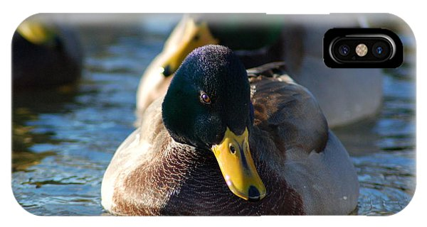 Mallard In The Morning Sun IPhone Case