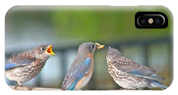 Mama Bluebird And Fledglings IPhone Case