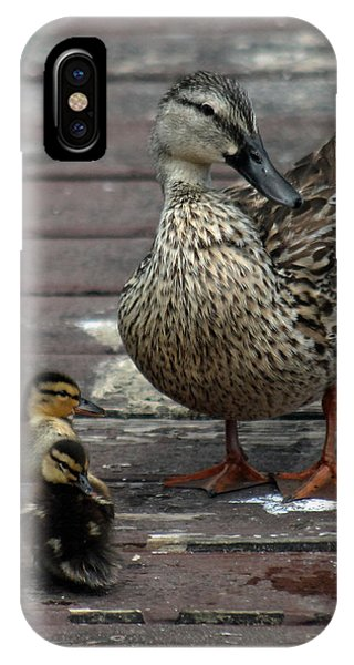 Mama Duck And Ducklings IPhone Case