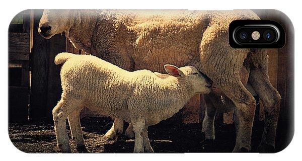 Mama Sheep And Baby Lamb IPhone Case