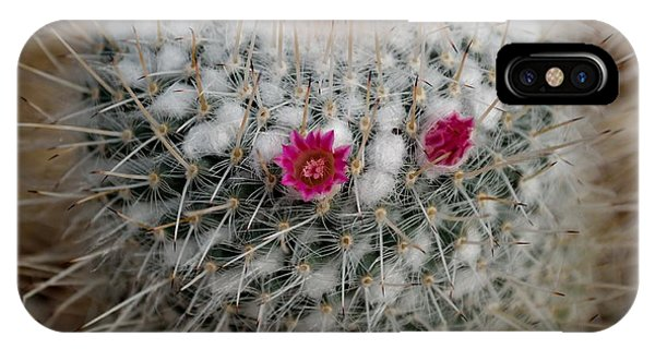 Mammillaria Geminispina IPhone Case