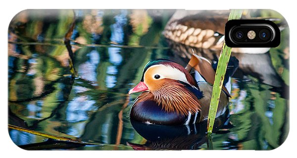 Mandarin Duck Reflections IPhone Case