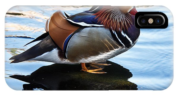 Wood Ducks iPhone Case - Mandarin Duck by Robert Bales