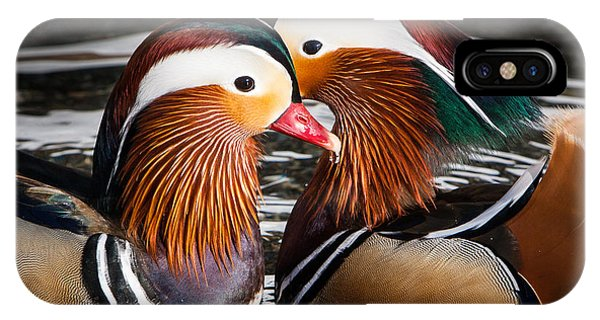 Mandarin Lovers IPhone Case