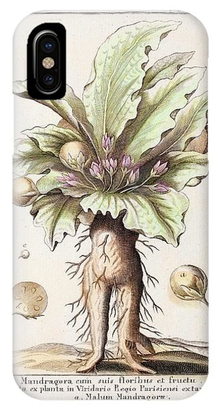 Mandrake Plant Phone Case by Paul D Stewart