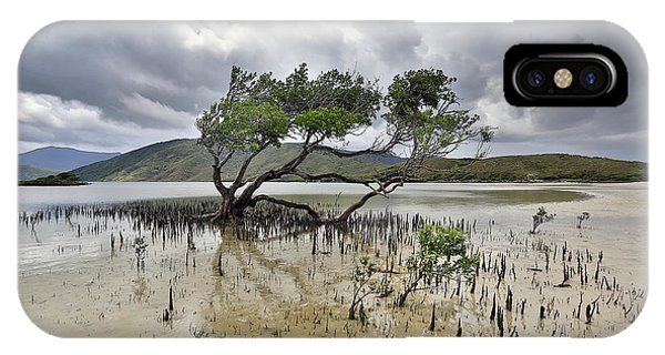 Far North Queensland iPhone Case - Mangrove Tree by Peter Dore
