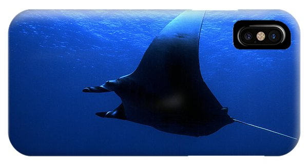 Manta Ray IPhone Case