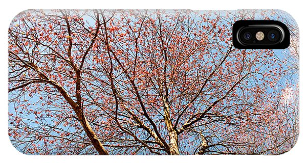 IPhone Case featuring the photograph Maple In Bloom by Kristia Adams
