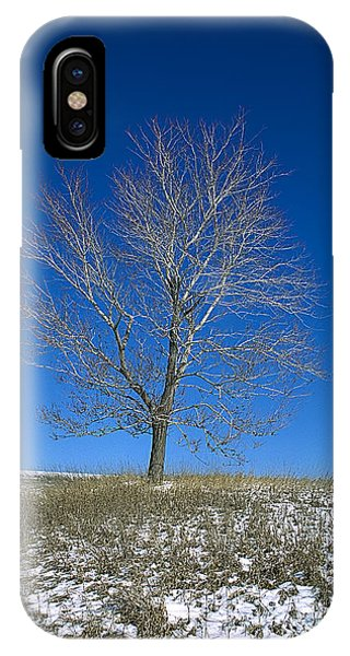 Maple In Winter IPhone Case