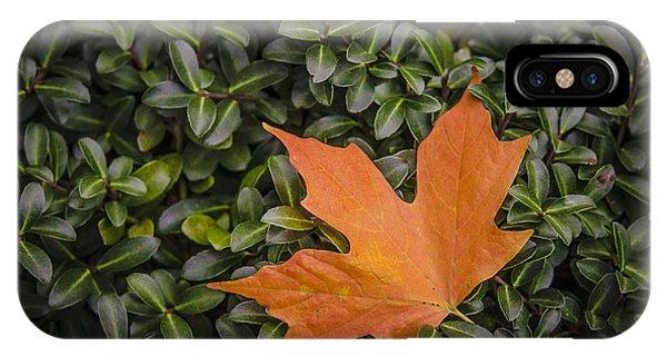 Maple Leaf On Boxwood IPhone Case