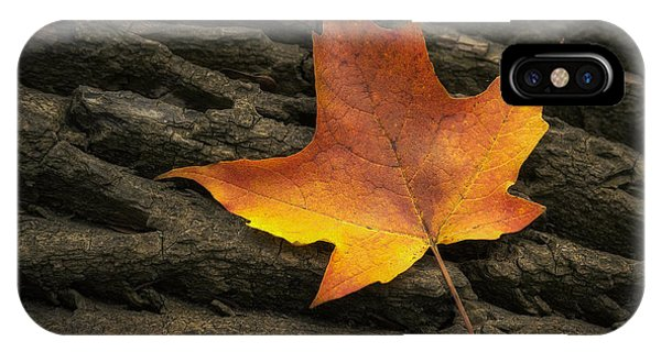 Amber iPhone Case - Maple Leaf by Scott Norris