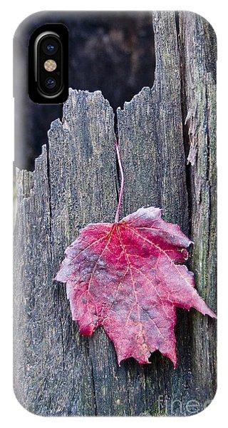Maple Leaf - Uw Arboretum - Madison IPhone Case