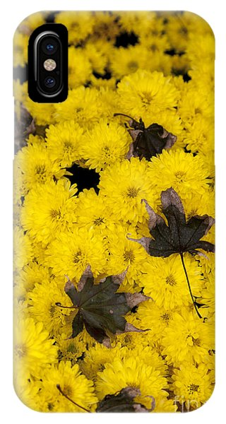 Maple Leaves On Chrysanthemum IPhone Case