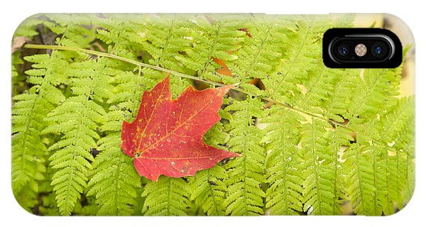 Maple On Fern IPhone Case
