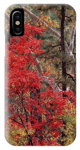 Maple Sycamore Pine IPhone Case