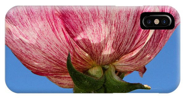 Marbled Mable Ranunculus Flower By Diana Sainz IPhone Case