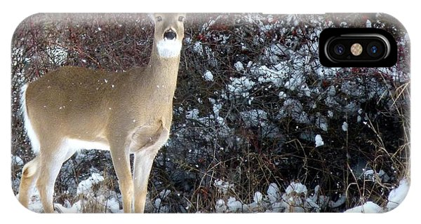 March Snow And A Doe IPhone Case