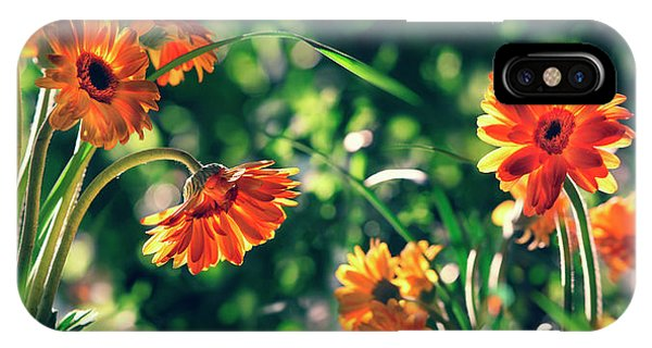 Wiese iPhone Case - Marguerites In Provence, Arles by Per-Andre Hoffmann