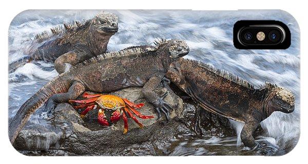 Marine Iguana Trio And Sally Lightfoot IPhone Case