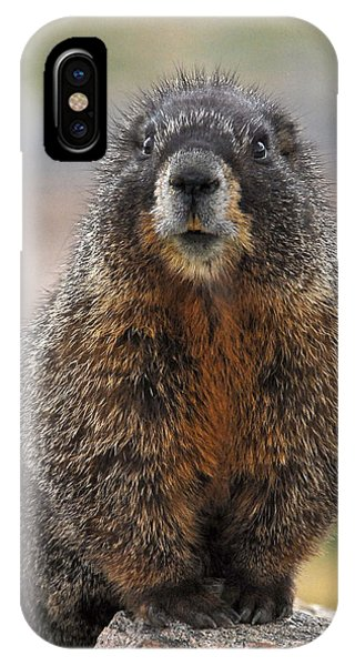 IPhone Case featuring the photograph Marmot by Mae Wertz