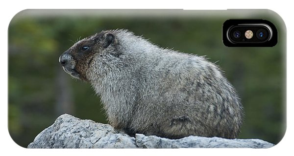 Marmot IPhone Case