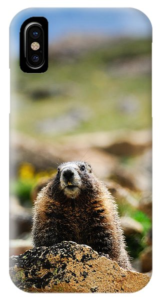 Marmot On A Rock IPhone Case