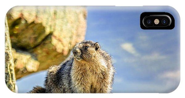 iPhone Case - Marmot by Viktor Birkus