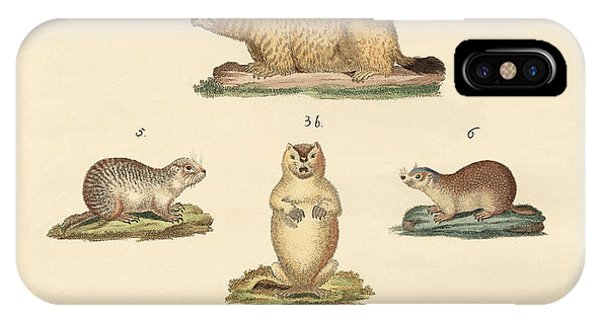 Groundhog iPhone Case - Marmots And Moles by Splendid Art Prints