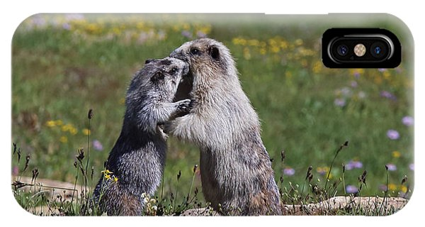 Marmots In Glacier Np IPhone Case