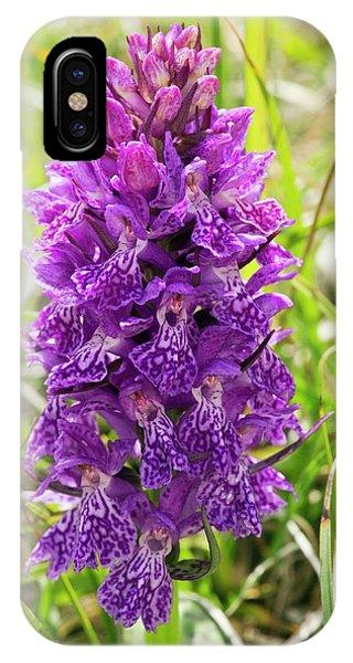 Monocotyledon iPhone Case - Marsh Orchid (dactylorhiza Osmanica) by Bob Gibbons