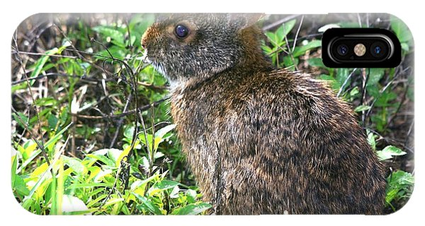 Marsh Rabbit IPhone Case