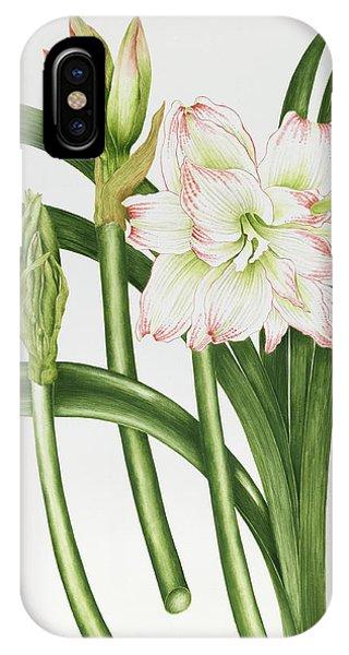 Amaryllis iPhone Case - Mary Lou Amaryllis by Sallly Crosthwaite