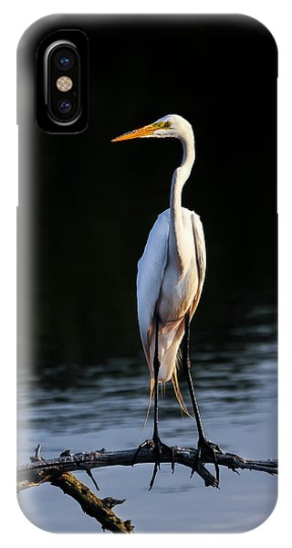 Maryland Great Egret IPhone Case