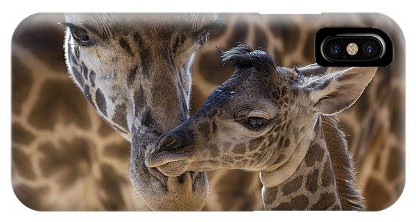 Masai Giraffe And Calf IPhone Case