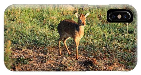 Masai Mara Dikdik Deer IPhone Case
