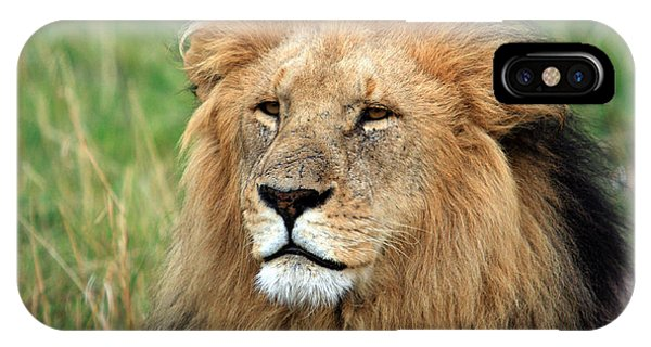 Masai Mara Lion Portrait    IPhone Case