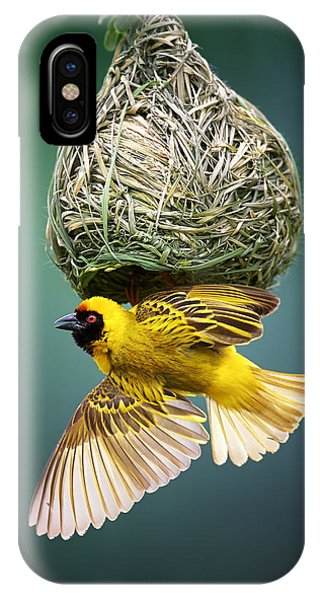 Background iPhone Case - Masked Weaver At Nest by Johan Swanepoel