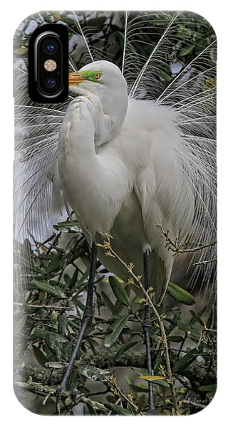 Mating Plumage IPhone Case