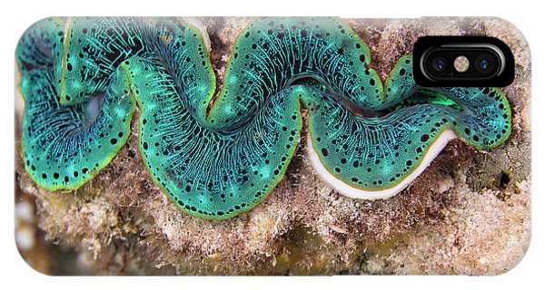 Barrier Reef iPhone Case - Maxima Clam by Michael Szoenyi/science Photo Library
