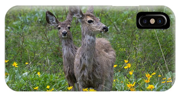 White Tailed Deer iPhone Case - Meadow Meal by Mike  Dawson
