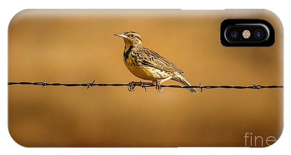 Meadowlark And Barbed Wire IPhone Case