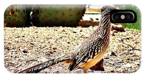 Greater Roadrunner iPhone Case - Meep Meep by Marilyn Smith
