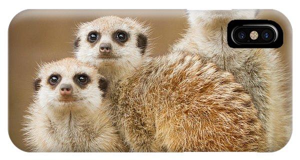 Meerkat Family IPhone Case