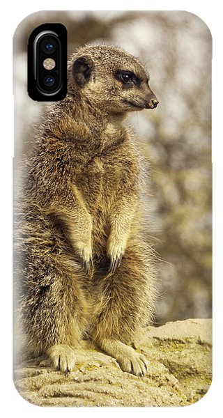 Meerkat iPhone Case - Meerkat On Hill by Pixel Chimp