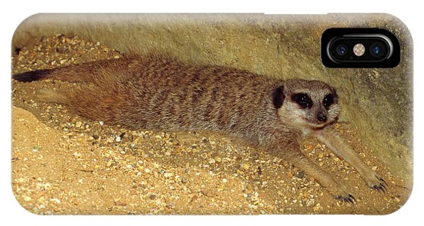 Meerkat iPhone Case - Meerkat Resting by Nigel Downer