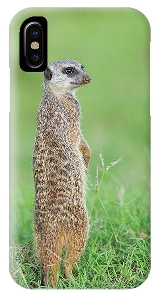 Meerkat iPhone Case - Meerkat Standing On Guard Duty by Peter Chadwick